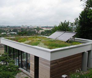 Dachbegrünung - Dachbau Pütz